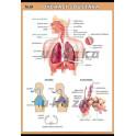 Dýchací soustava XXL (140 x 100 cm)