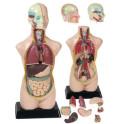 Mini torzo lidského těla - model