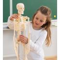 Malý skelet - model kostry člověka